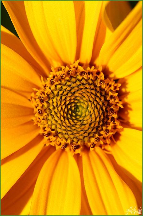Sonnenrad