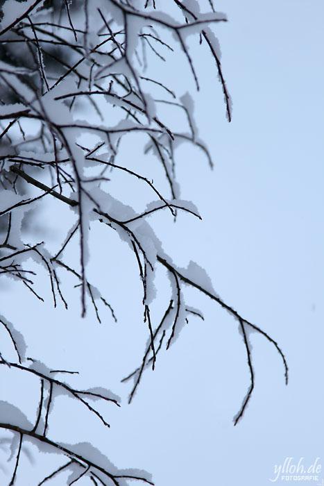 Schneezweige